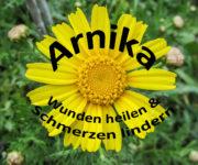 Arnika - Wunden heilen und Schmerzen lindern