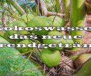 Kokoswasser - das neue Trendgetränk?