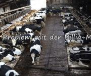 Das Problem mit der Billigmilch