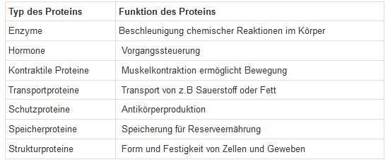 Funktionen Proteine Beispiele