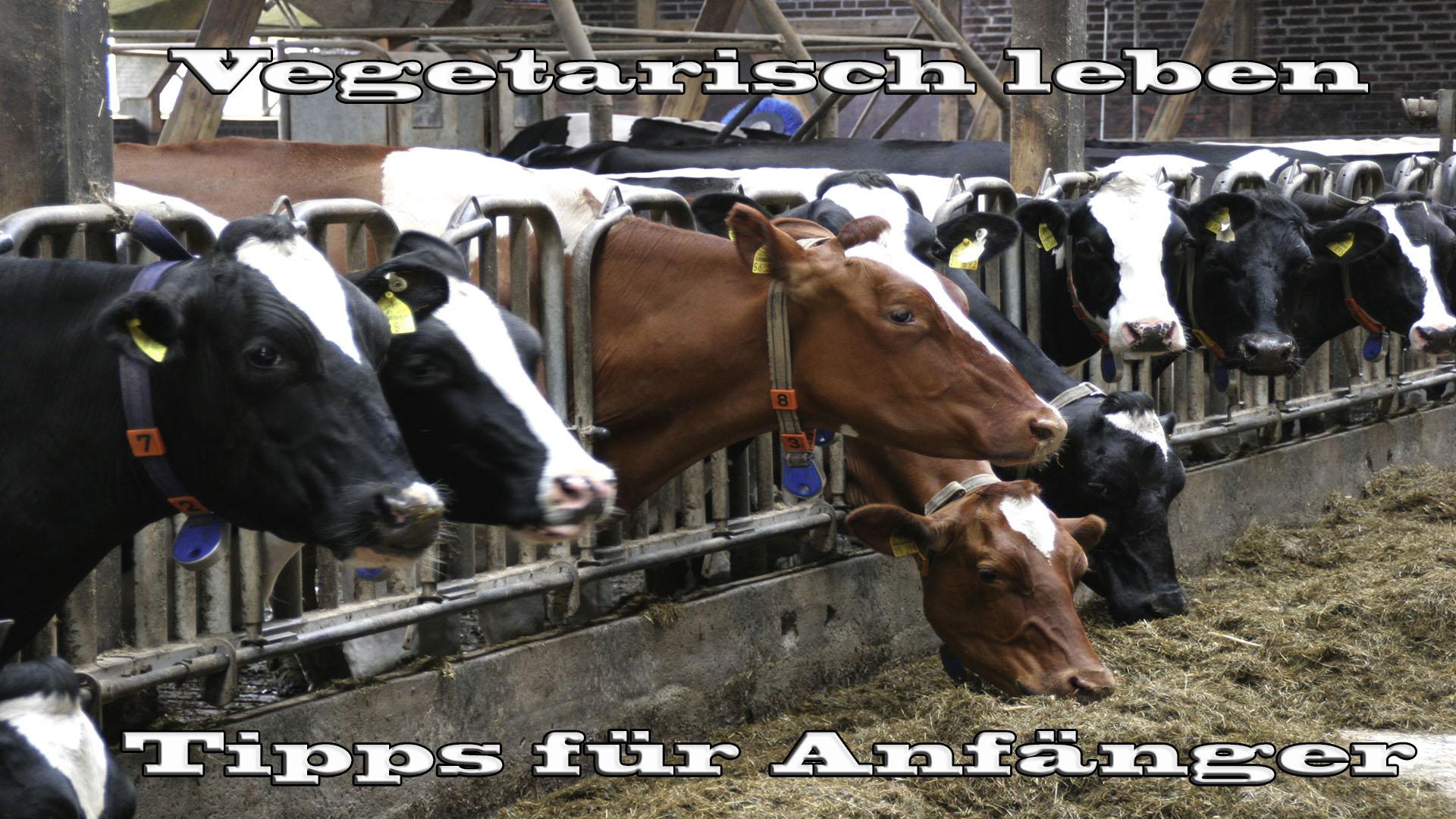 Vegetarisch leben - Anfängertipps auf Kochen-verstehen.de